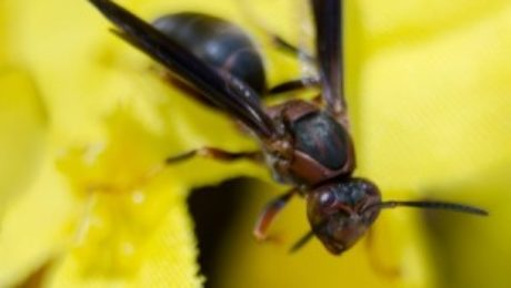 bees, wasps, and hornets | Any Pest