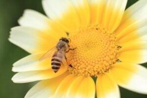 bee-control