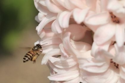 Wasps, Hornets, and Honey Bees - Pest Control