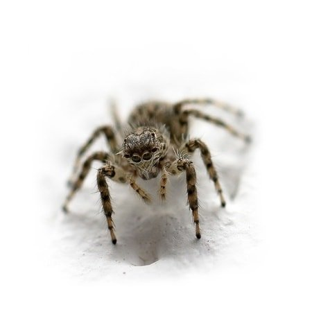 7 Ways to Get Rid of a Spider Infestation   Any Pest