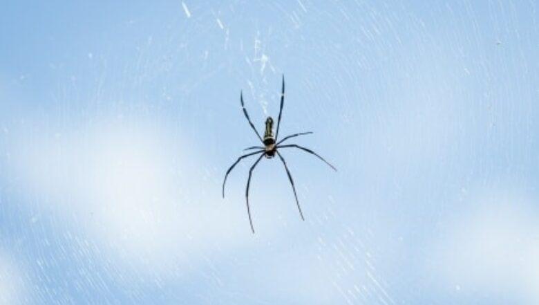 Spider Infestation | Any Pest