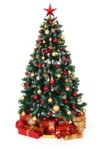 christmas tree pest-free christmas-tree-pest-control