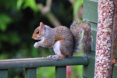 Squirrel Control Atlanta