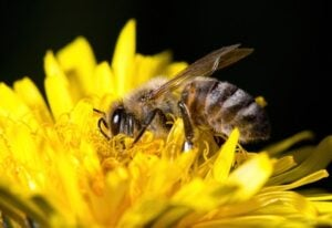 bees, wasps, and hornets