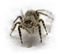 spider | Any Pest Inc.