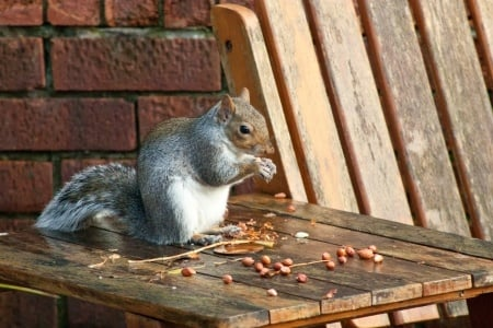 Fall pest control forecast | gray squirrel