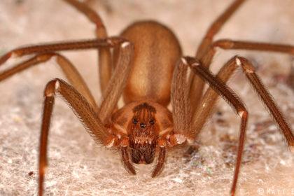 poisonous-spider-bite