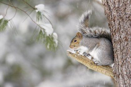 Winter Pest Control Forecast