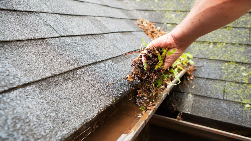 clean your gutter | Any Pest Inc.