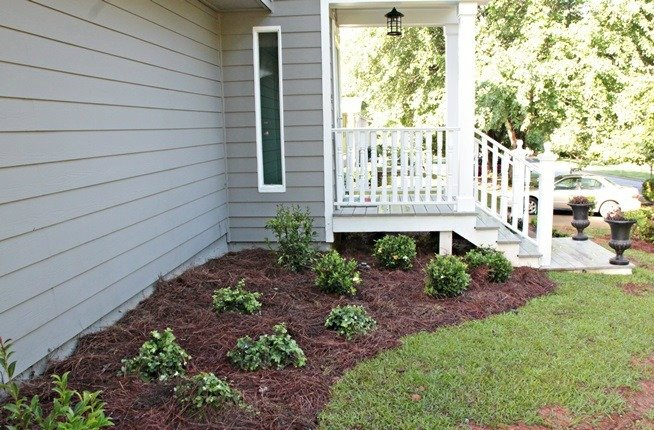 pine staw against house | Any Pest Inc.