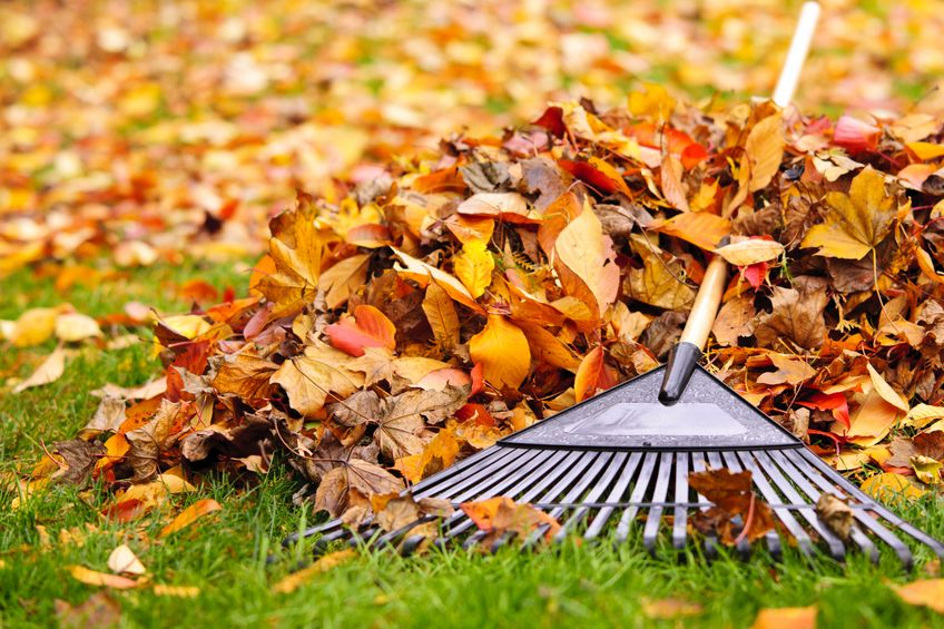 Leaf Clean Up | SolutionBuilt