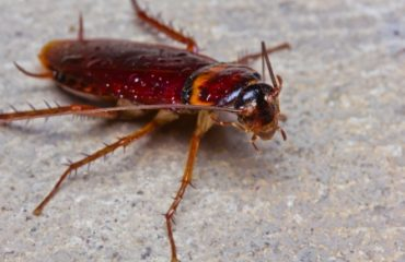 Cockroaches: How to Prevent a Winter Roach Infestation | Any ...