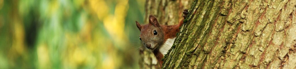Squirrel on Tree | Any Pest Inc.