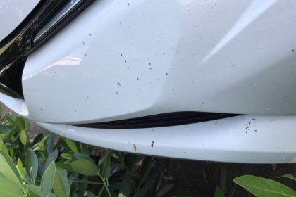 Ants in My Car | Any Pest Inc.