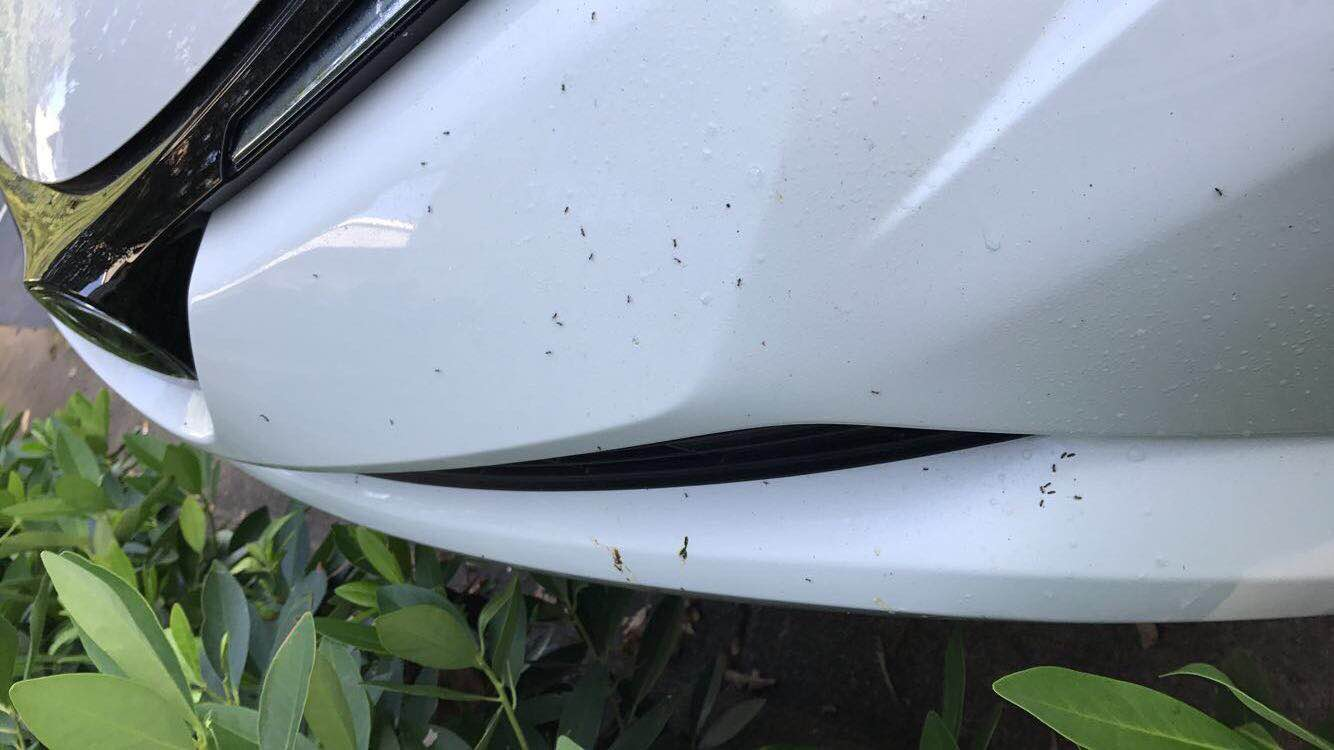 Help! I Have Ants In My Car | Ant Infestations Tips | Any