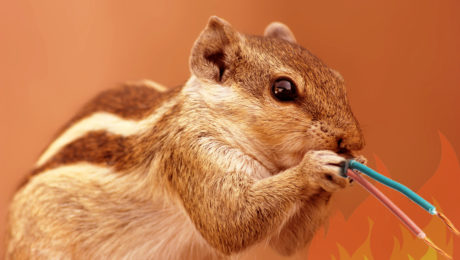 Squirrel Chewing Wire, Winter Pest Control Tips