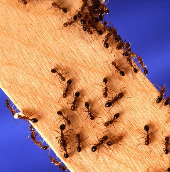 Ants on Wood | Spring Pest Control | Any Pest