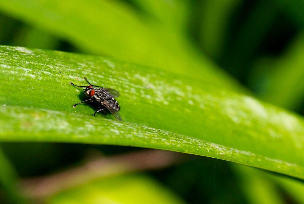 Bug on Leaf | Spring Pest Control | Any Pest