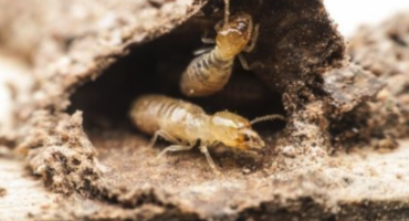 Winter Termite Treatment | Any Pest