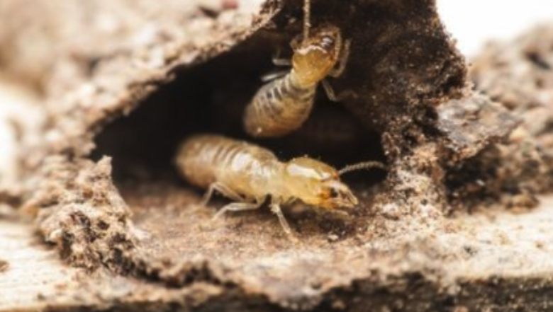 Winter Termite Treatment | Any Pest
