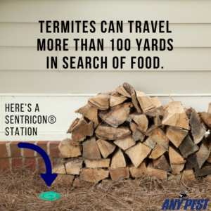 Any Pest Termite Control | Sentricon System Termites