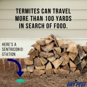 Termite Control | Any Pest Inc.
