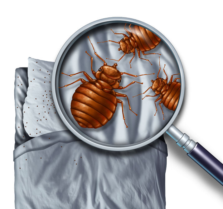 How to Prevent Bed Bugs | Any Pest
