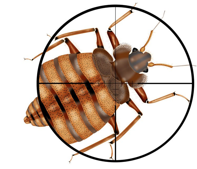 Bed Bugs What Are They And How To Get Rid Of Them Any Pest Inc