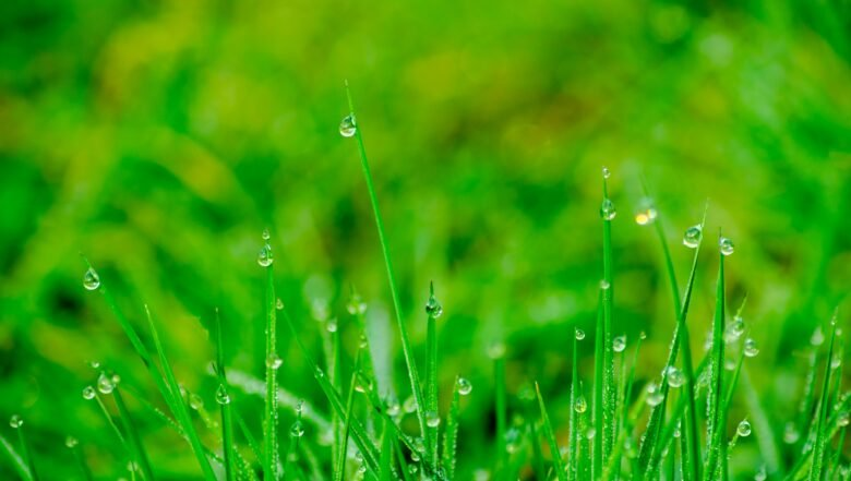 Pests After Rain | Any Pest Inc.