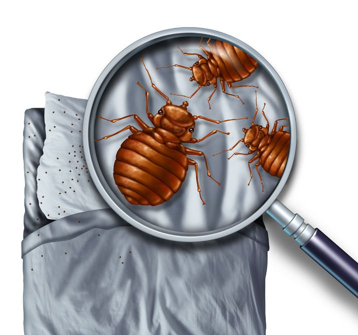 Bed Bug Control   Any Pest