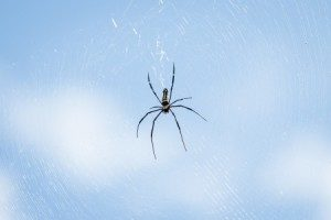 Spiders Good or Bad | Any Pest