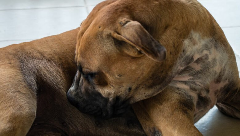 Get Rid of Fleas on Dog | Any Pest