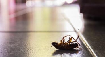 Any Pest Cockroach Infestation | Any Pest