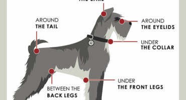 Ticks in Georgia on Pets | Any Pests