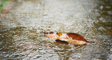 Keeping Insects Out After The Rain | Any Pest Inc