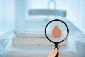 Finding Bed Bugs   Any Pest Inc