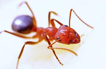 Fire Ants In Georgia | Any Pest Inc
