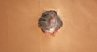 Wildlife Exclusion For Your Home   Any Pest