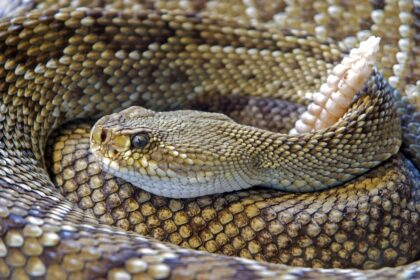 Snakes In GA   Any Pest
