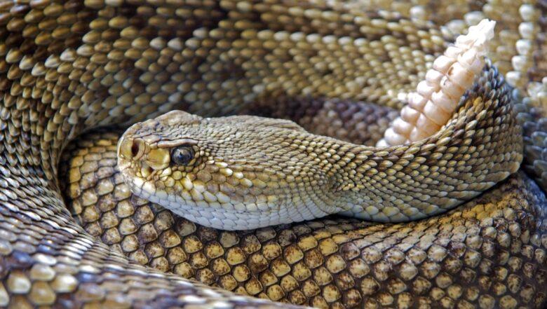 Snakes In GA | Any Pest