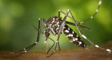 mosquito control service  Any Pest