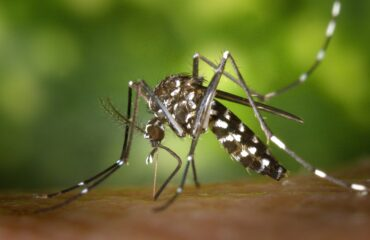 mosquito control service | Any Pest