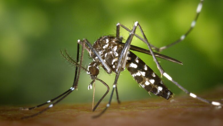 mosquito control service| Any Pest