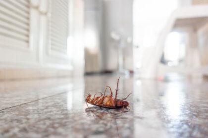 Springtime Pests | Any Pest