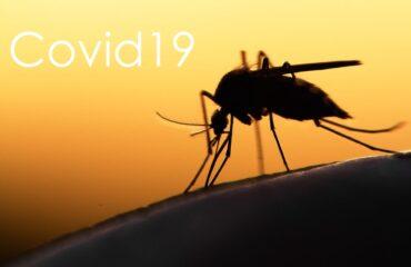 Coronavirus From Mosquitoes | Any Pest