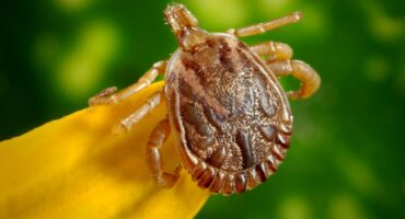 Tick Prevention For Your Home | Any Pest