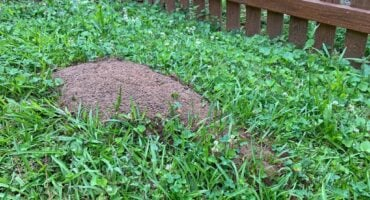How To Prevent Any Hills In Your Yard | Any Pest